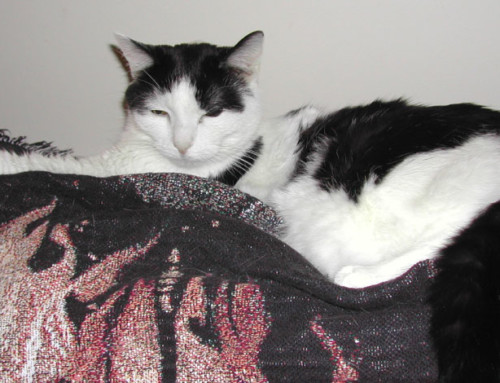 Happy Tail:  Sadie & Manny