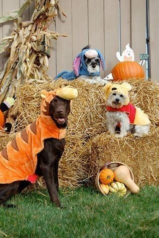halloween photos at nature s feed helping paws animal shelter