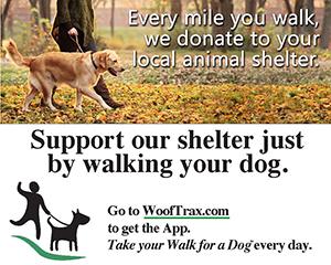walk_dog_our_shelter_poster