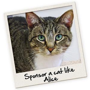sponsor-a-cat-300x300