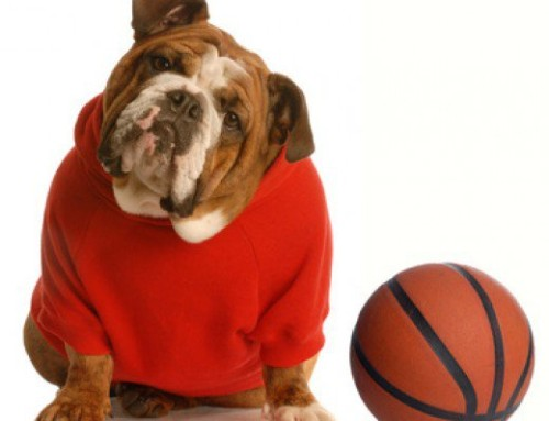 Windy City Bulls host Fundraiser for Helping Paws