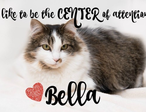 HP Animal of the Week – Bella