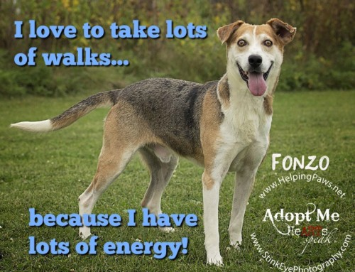 HP Animal of the Week – Fonzo