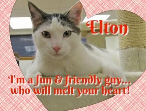 HP Animal of the Week – Elton