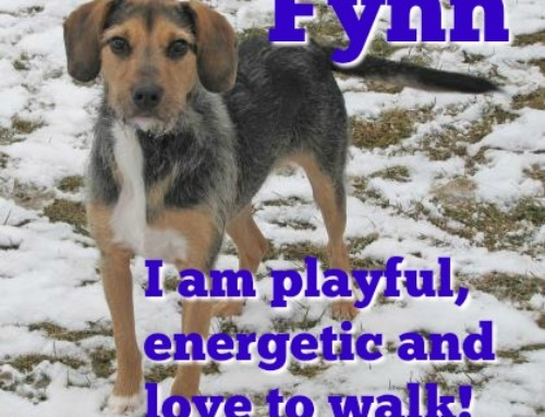 HP Animal of the Week – Fynn