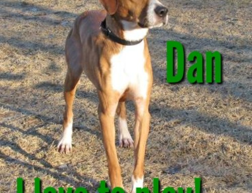 HP Animal of the Week – Dan