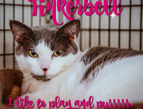 HP Animal of the Week – Tinkerbell